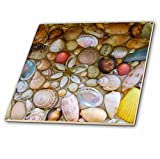 3dRose ct_155651_4 Seashells Photography Colorful Sea Shells Pattern Ocean Seaside Nautical Beach Feel Decor Ceramic Tile, 12-Inch