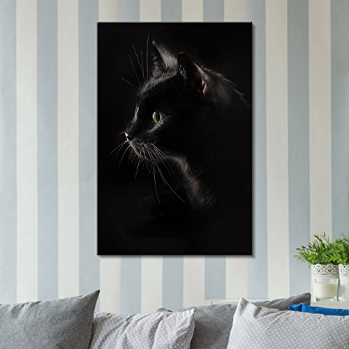 Black Cat with Dark Background