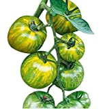 Organic Green Zebra Heirloom Tomato Seeds - Large Tomato - One of The Most Delicious Tomatoes for Home Growing, Non GMO - Neonicotinoid-Free.