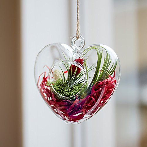 Heart of Air Glass Terrarium with Living Air Plant - Live Trends