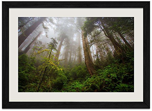Redwood Forest - Art Print Wall Black Wood Grain Framed Picture(16x12inches)