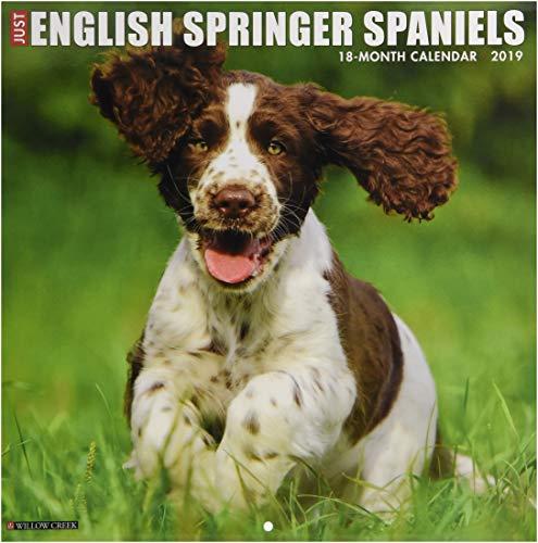 Just English Springer Spaniels 2019 Wall Calendar (Dog Breed Calendar) from Willow Creek Press