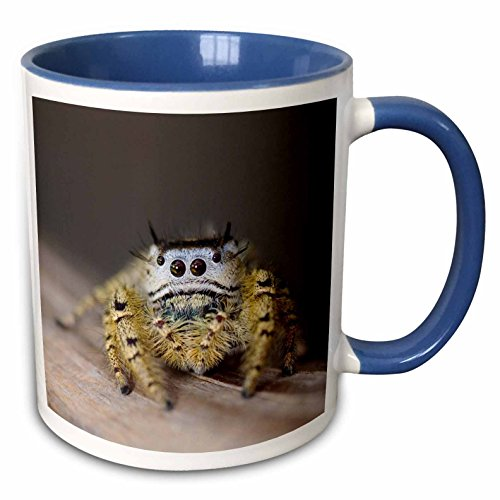 3dRose 84289_6 Jumping Spider New Braunfels Hill Country Texas Ceramic Mug, - Braunfels New Outlet
