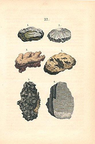 Fossils & petrified wood &c. rare 1869 hand color antique print
