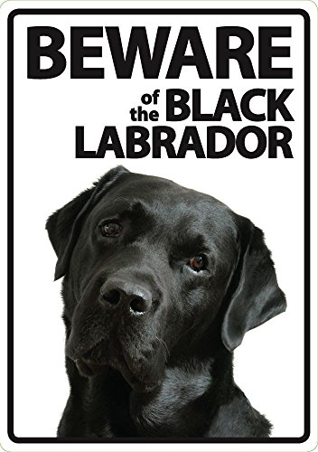 Beware of the Black Labrador - Flexi Portrait