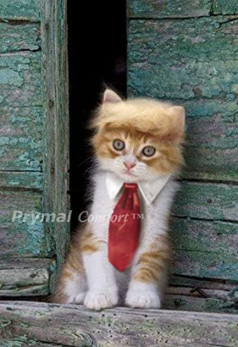 Trump Cat/Dog Costume for Halloween, Parties and Pictures 15