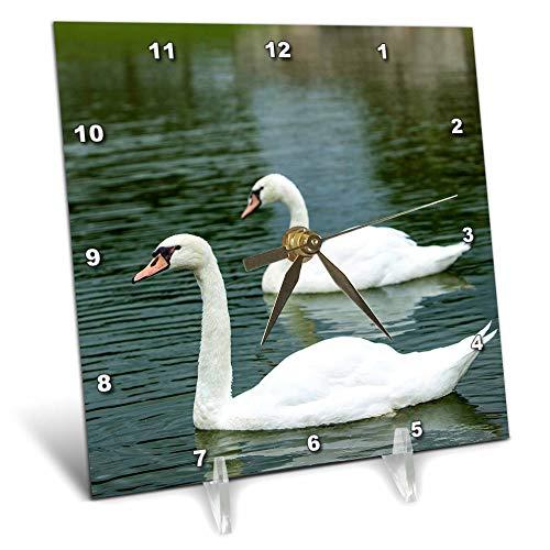 - 3dRose Danita Delimont - Swans - Swans in a Pond at Chateau Villandry Near Tours, Loire Valley, France - 6x6 Desk Clock (dc_313105_1)