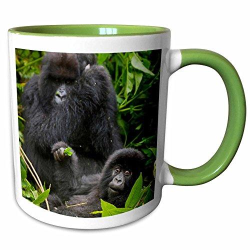 Baby Mountain Gorilla (3dRose 132072_7 Rwanda, Mountain Gorilla, Volcanoes Park-AF35 RB Ceramic Mug, Green/White)