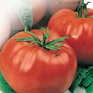 Red Tomato Moneymaker Seeds Heirloom NON-GMO, Organically Grown