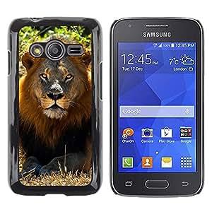 TopCaseStore / la caja del caucho duro de la cubierta de protección de la piel - Lion Sun Summer Mane Africa Savannah Nature - Samsung Galaxy Ace 4 G313 SM-G313F