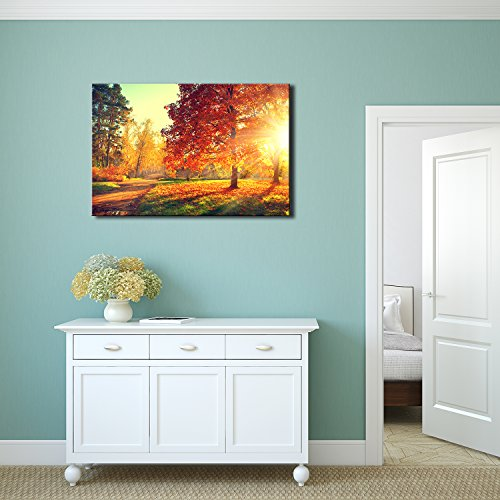 Autumn Scene Fall Trees and Leaves in Sun Light Wall Decor ation