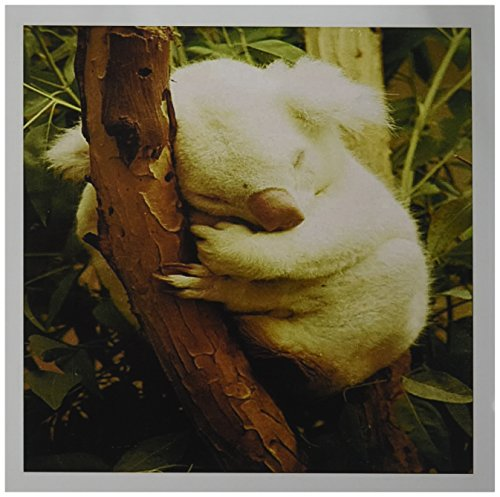 Price comparison product image 3dRose A Rare Albino Koala Bear - Greeting Cards, 6 x 6 inches, set of 6 (gc_62584_1)