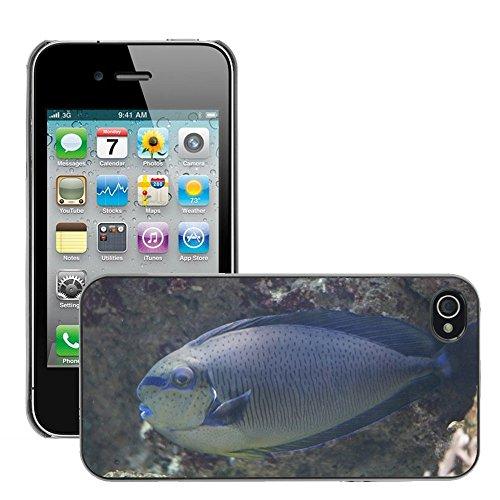 Bild Hart Handy Schwarz Schutz Case Cover Schale Etui // M00135321 Triggerfish Fisch Aquarium // Apple iPhone 4 4S 4G