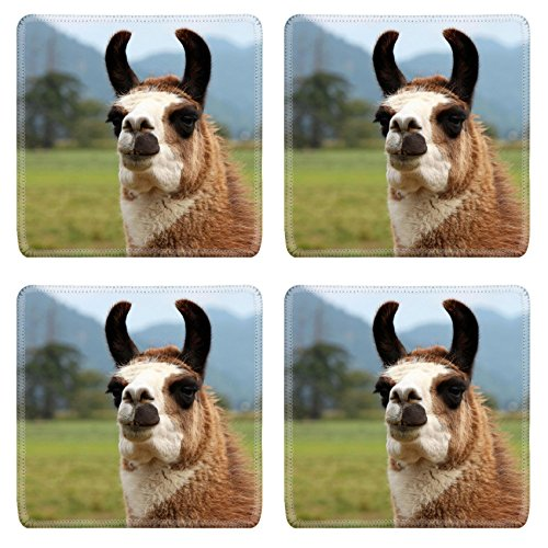 929 Dining Set (Liili natural rubber Square Coasters IMAGE ID: 19146980 Smiling Llama Here s Looking at You)