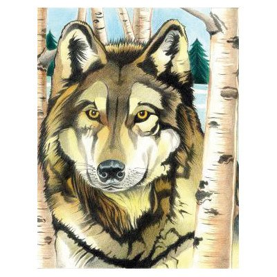 Colored Pencil By Numbers Intermediate Medium Wolf Colored Pencil - Stamp Medium Punch