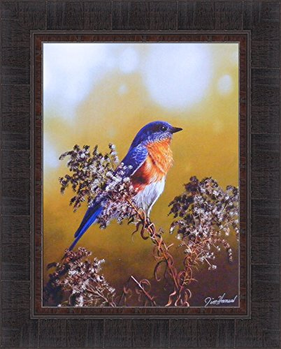 Eastern Bluebird by Jim Hansel 17x21 Song Bird Blue Framed Art Print Wall Décor Picture