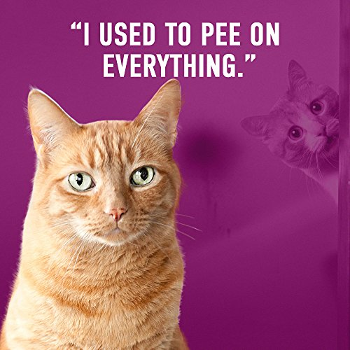 why has my female cat started peeing everywhere