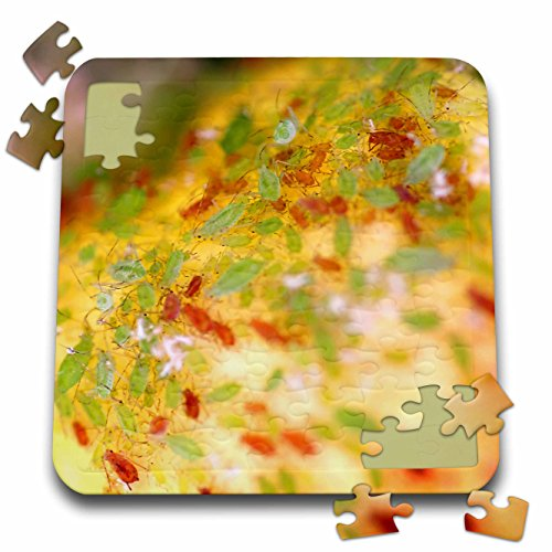 henrik-lehnerer-designs-animal-green-and-brown-aphids-infesting-a-rose-bush-10x10-inch-puzzle-pzl-24