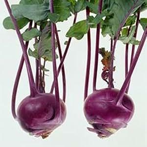 Vegetable Seeds coles de repollo Delikatesna Blakytna - delicioso azul de la herencia