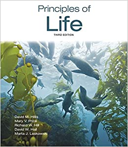 Descargar Bittorrent En Español Principles Of Life It PDF