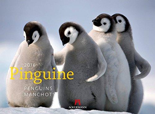 Pinguine 2016