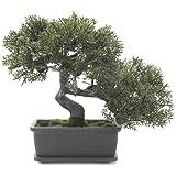 Euro Palms 82600111 Bonsai 21 cm