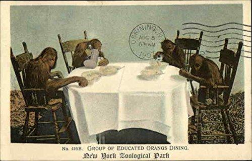 Group of Educated Orangs Dining Monkeys Original Vintage Postcard