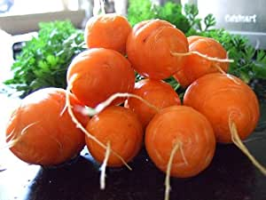 100 Heirloom Parisian Carrot Seeds