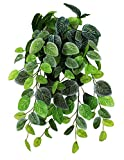 Pangea Hanging Bush, 18 inches