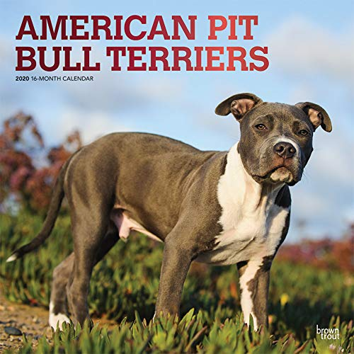 The American Pit Bull Terrier was the mascot for Buster Brown Shoes because of the breed's strong and sturdy appearance. These intelligent dogs are loyal, gentle, and courageous. Because they are confident, eager to please, and affectionate, Pit Bull...
