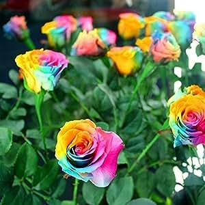 200 Pcs Flower Seeds From Beautiful Rainbow Rose Seeds Bonsai Seeds DIY Garden Decor