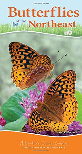 Butterflies of the Northeast (Adventure Quick Guides)