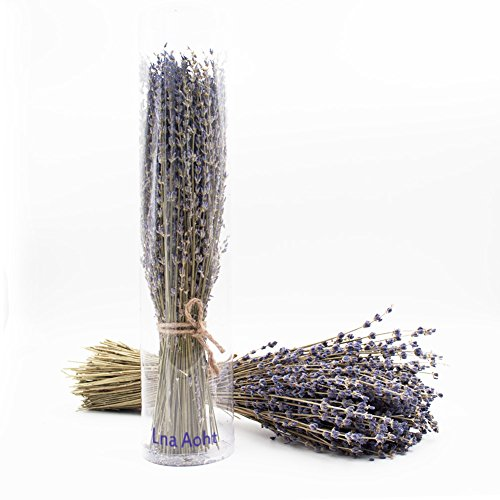 Lavender Bundles- with 200 PCS Lavender Buds - Air Natural Freshener - Prevents Moth and Insects - Wedding Decoration, House Decoration, Unique Present - 100 Percent Pure Dried Lavender (Lavender Stem)