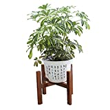 Wood Potted Plant Stands DOIOWN Corner Flower Stand Indoor Plant Pot Holder Planter Supports Display Stands for Home,Garden,Office (Walnut&Short)