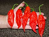 *Seeds and Things 10 Plus Bhut Jolokia Pepper Seeds-- AKA Ghost Pepper, grown in Isolation to insure quality seeds-