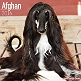 Afghan Dog Calendar - Afghan Hounds Calendar - Breed Specific Afghans Calendar - 2016 Wall calendars - Dog Calendars - Monthly Wall Calendar by Avonside