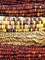 100 ORNAMENTAL INDIAN CORN WAMPUM Mixed Colors Zea Mays Vegetable Seeds