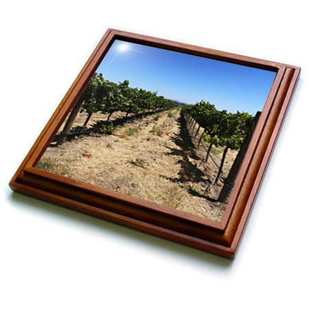 3dRose Tory Anne Collections Photography - SONOMA CALIFORNIA WINE VINEYARD - 8x8 Trivet with 6x6 ceramic tile (trv_273529_1) ()