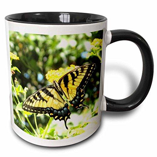 Swallowtail Butterfly Pictures - 3dRose mug_200105_4 Awesome Yellow Swallowtail Butterfly Photography - Two Tone Black Mug, 11oz
