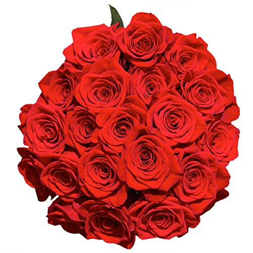 50 Red Roses | Fresh Flowers Express Delivery | Perfect Gift for Birthday, Anniversary, Love or any occasion.