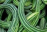 Cucumber, Armenian Yard Long, Snake Melon, NON-GMO, Variety Sizes 4000