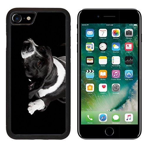 Price comparison product image MSD Premium Apple iPhone 7 Aluminum Backplate Bumper Snap Case iPhone7 IMAGE ID: 8647405 Beautiful dog lying on the floor with a sad look isolated on black