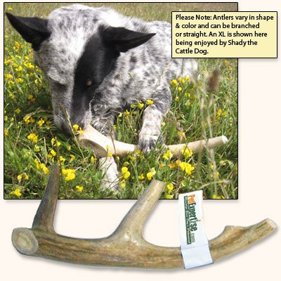 Antler Dog Chew from Pet Expertise, X-Large 8″-10″ Long, 1 Piece, My Pet Supplies