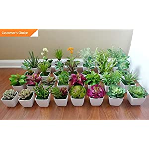 Hebel 2 Mini Potted Artificial Flowers unkillable Succulents Plants with Pot | Model ARTFCL - 512 | 2