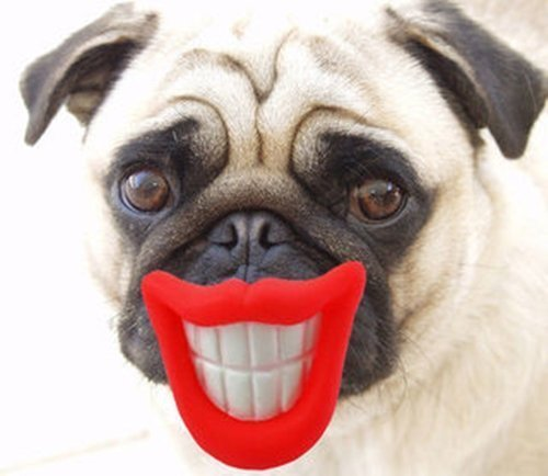 4 X FUNNY SMILE DOG PET BALL THROW RUBBER TOY GRINNING LIPS
