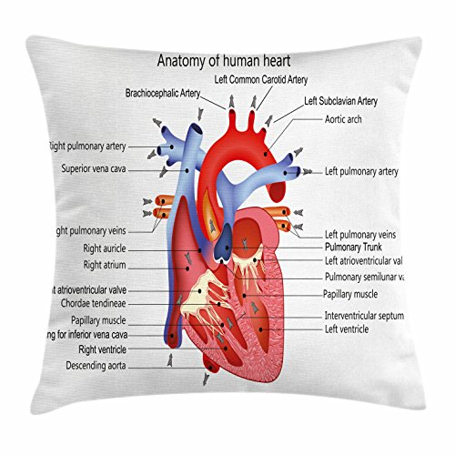 Veins Case - Ambesonne Educational Throw Pillow Cushion Cover, Medical Structure of the Hearts Human Body Anatomy Organ Veins Cardiology, Decorative Square Accent Pillow Case, 16 X 16 Inches, Coral Red Blue