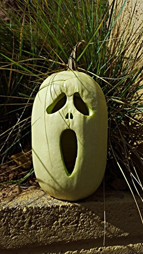 LAMINATED 24x42 inches POSTER: Pumpkin October Halloween Holiday Autumn Fall Celebration Spooky Horror Decoration Halloween Pumpkin Season Halloween Background Ghost Vegetable Seasonal Fun Gourd]()