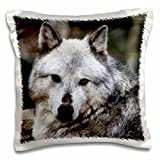 WhiteOak Photography Wolves - Gray Wolf looking straight at you - 16x16 inch Pillow Case