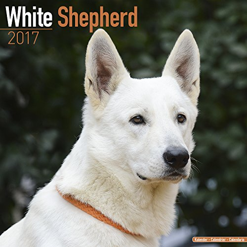 Dog Breed Calendars (Vintage, Z White Shepherd Calendar 2017)
