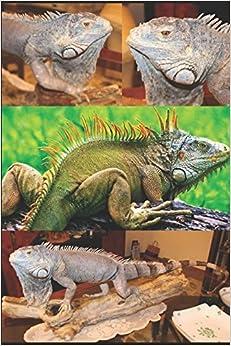 TAXIDERMIE: NOTIONEN E TECHNISCHE VOL. 4 Reptilien: Vorbereitung von einem LEGUAN (REPTILES) (German Edition)